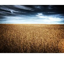 Alberta Wheat Field Photographic Print