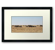 Elephant Herd, Serengeti, Tanzania  Framed Print