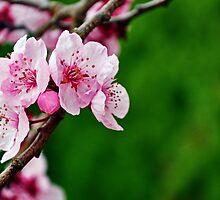 Spring by Jemma Ryan