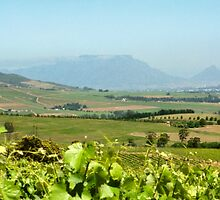 Table Mountain from Stellenbosch, South Africa  by Carole-Anne