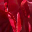 fold over red fold by byzantinehalo