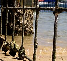 Barred - Harbord Beach, Sydney, NSW by Deanna Roberts Think in Pictures