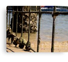 Barred - Harbord Beach, Sydney, NSW Canvas Print