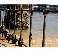 Barred - Harbord Beach, Sydney, NSW Photographic Print