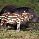 Mint Humbug and Mum (Brazilian Tapir) by Krys Bailey