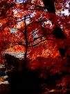 Autumn Glow by NatureGreeting Cards ©ccwri