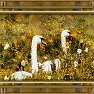swans by cynthiab