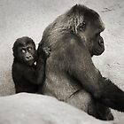 Baby Gorilla and Mum by DanielTMiller