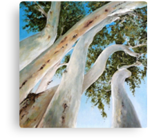 Ghost Gum Snakes Canvas Print