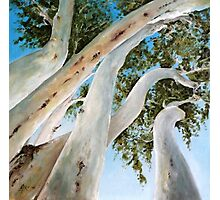 Ghost Gum Snakes Photographic Print