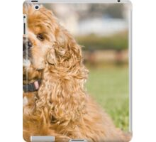 Tiny American Cocker Spaniel