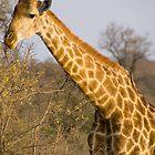 Giraffe by Erik Schlogl