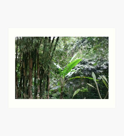 A Green Tranquil Forest Art Print