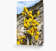 spiny wattle Greeting Card