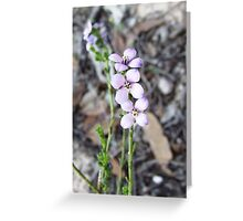 comesperma calymega Greeting Card