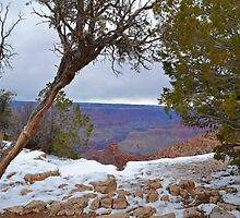 Grand Canyon 15 by Leona Bessey