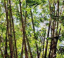 Bamboo by Dareimages