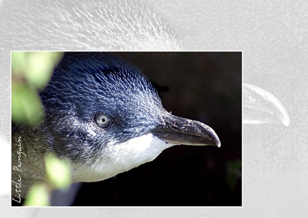 Australian Birdlife - Little Penguin by Holly Kempe