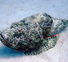 Devil Scorpionfish by cooperscuba