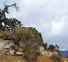 Grand Canyon 16 by Leona Bessey