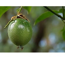Passionfruit Photographic Print