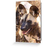Wild Dog Portrait Greeting Card