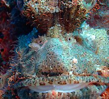Smallscale Scorpionfish by cooperscuba