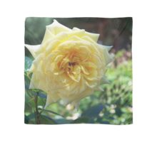 YELLOW ROSE IN DENVER Scarf