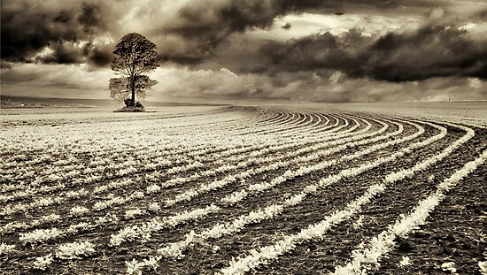 Crops by Tracie Louise