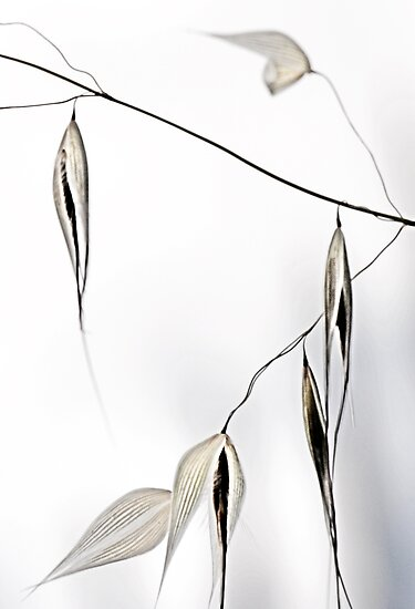 empty grass seeds 2 by nadine henley
