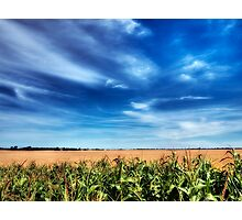 Corn and Wheat Photographic Print