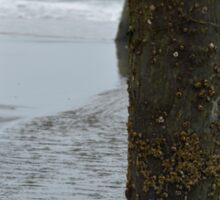Ocean barnacles Sticker
