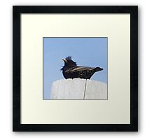 Wind Blown Starling Framed Print