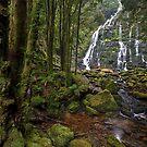 Tasmanian Wilderness by Michael Treloar