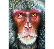 Primate- Macaque Photographic Print
