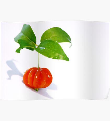Brazilian Cherry Poster