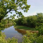 Mississippi Green by tom j deters