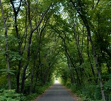 The Path by tom j deters