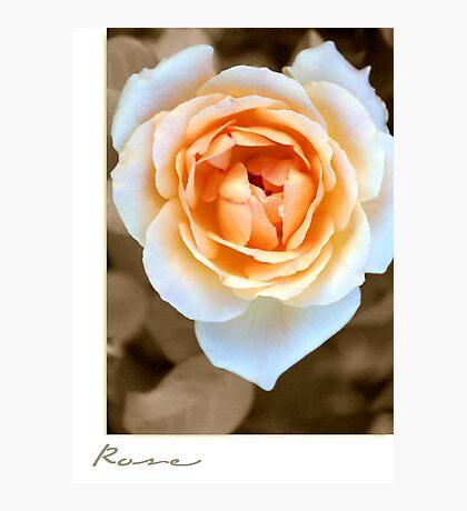 """Smooth Angel"" Rose Photographic Print"