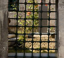 Grate View by phil decocco
