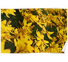 A Sea of Yellow Poster