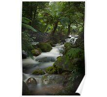 Rainforest falls #3 Poster