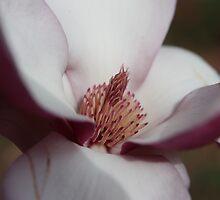 Magnolia Heart by ElyseFradkin