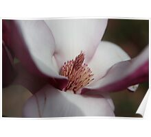 Magnolia Heart Poster