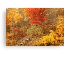 Colors Of Autumn, Shenandoah Canvas Print
