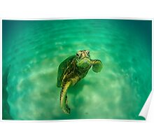 Grumpy Sea Turtle Poster