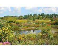Butterfly Garden Photographic Print