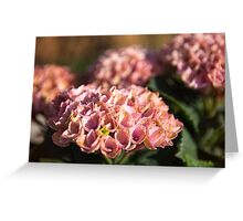 Antique Pink Hydrangea Greeting Card