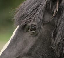 Black Beauty by Franco De Luca Calce
