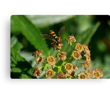 Who Took The Pollen Canvas Print